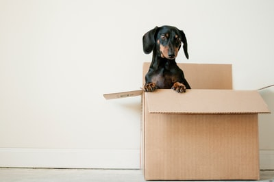 Which is better: a beauty box or a box of boxes?